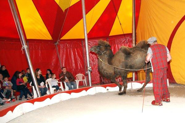 cirque europ en damparis le spectacle 12 cirque circo circus zirkus. Black Bedroom Furniture Sets. Home Design Ideas