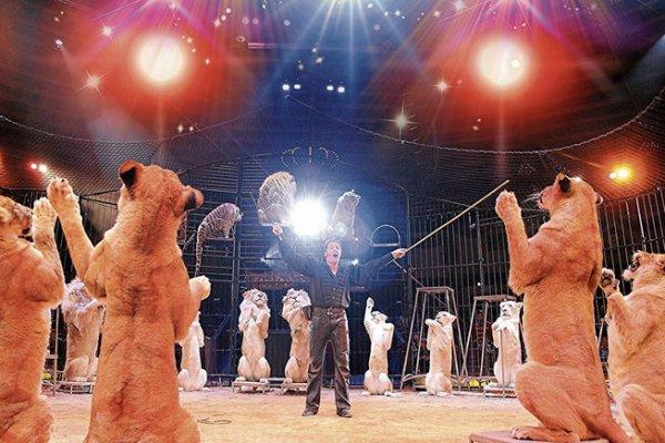 14 LIONNES EN PISTE !