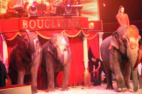 CIRQUE BOUGLIONE À DIJON LE SPECTACLE (16)