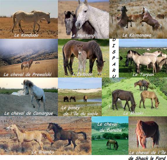 Le cheval sauvage, pas en esclavage !