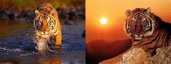 Le tigre du Bengale.