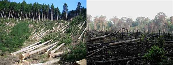 Déforestation.