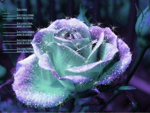 15 les roses