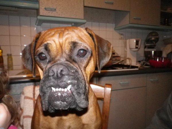 vous avez vu mes belles dents