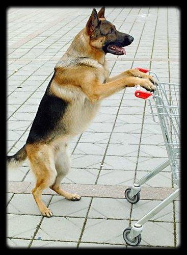 Je veux ce chien ! Donnez le moi !