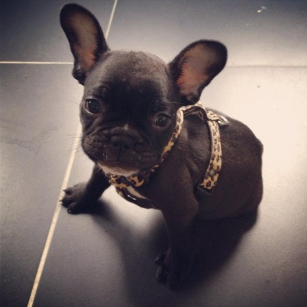 Cookie ♥ !