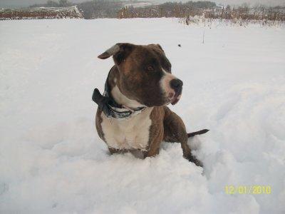 tyroon dans la neige