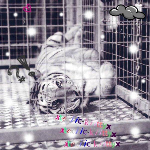 # article [ Pourquoi un homme qui tuent un homme ou un enfant va en prison pour plusieurs années, et un tigre ou un autre anmial qui marche tranquillement pour rejoindre sa familler se fait mettre derrière les barreaux pour toute sa vie ? n'y a-t-il pas de l'injustice la dedans ? Moi je trouve ça horrible ! Comment peut-on faire cela aux animaux alors que nous sommes tous pareils et que nous faisons parti du même monde ? ]