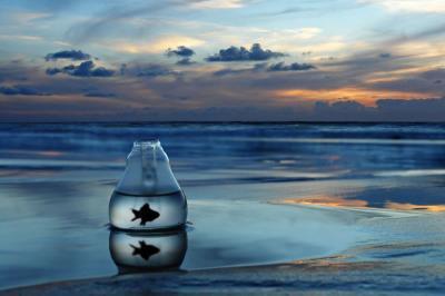 article #  [ Dauphin, liberté et non enfermé dans un bassin etroit le dauphin et le roi de l'océan et non du bassin ]