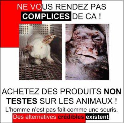 Pourquoi les faire souffrir ? Pourquoi ne pas les laisser vivre ? Et nous pourquoi nous sommes là ? Laissons les animaux vivre sans les faire souffrir !!