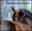 Photo de x--Ptits-concours-equins