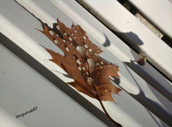 Séance photo Kim: l'automne est revenuuu 2/2