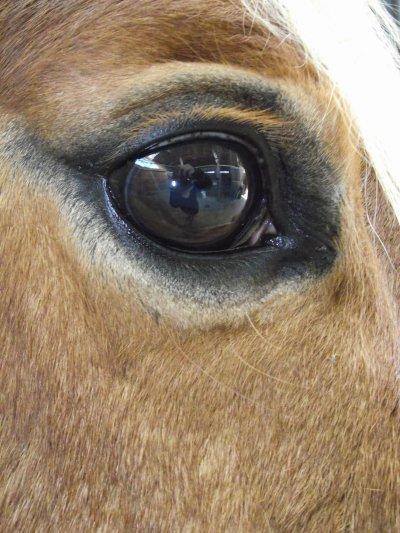 Oeil de Pippo :)