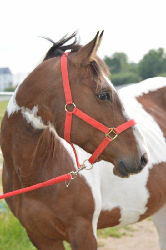 Si quelqu'un te dit que ce n'est qu'un cheval ..., contente Toi de Sourire, ils Ne Peuvent Pas Comprendre...