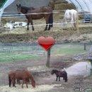 Photo de super-horse38