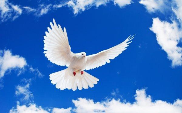 Liberté,paix,simplicité...