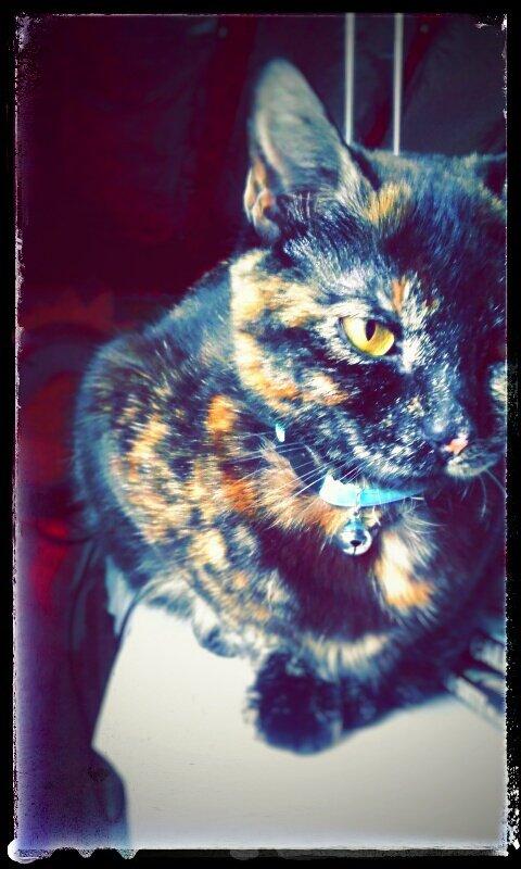 mon chat! $)