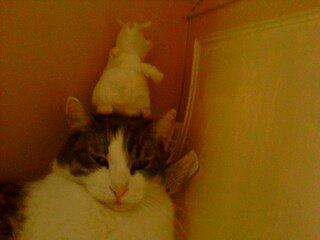 moi et mon ratatouille