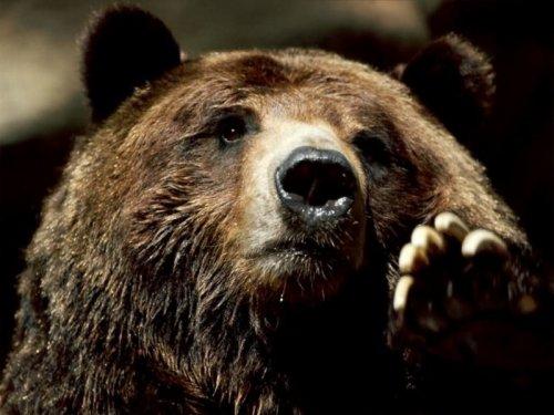 Animaux en Russie en danger