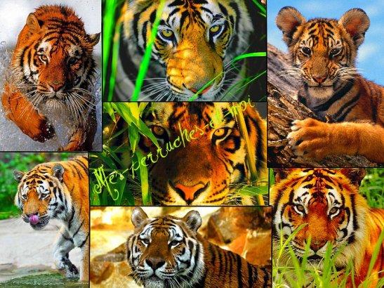 Protégeons la nature et les animaux