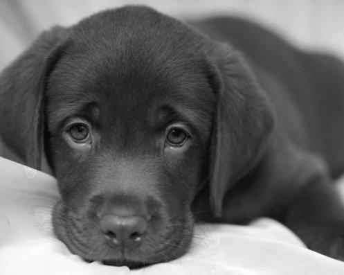 Les chiens méritent-ils cela ?