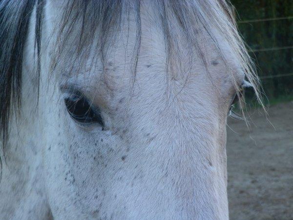 Je n'aurai jamais pensé apporter autant d'amour à un cheval