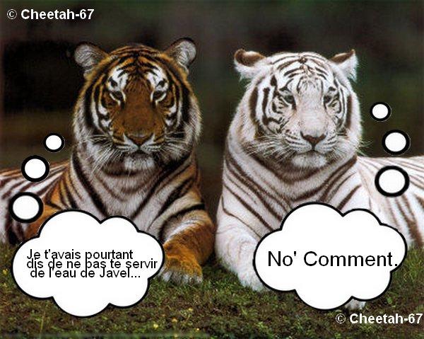 Le tigre et l'eau de Javel...