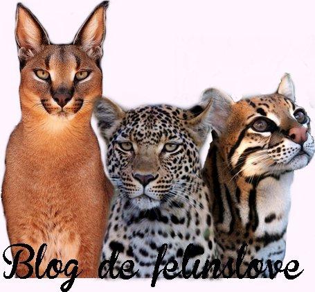 Partenariats avec felinslove