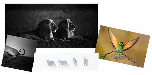 La protection animale, un enjeu pour l'humanité ! ~