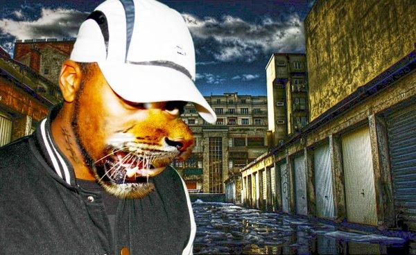 TIGERS / NEW SON 2011 avant la dinguerie  (2011)