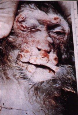 Blog de animaux maltraite 60 page 2 bog de animaux - Combien de temps pour porter plainte pour coup et blessure ...