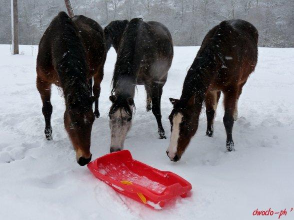 La neige s'en va et revient ! en attendant, luge joering!