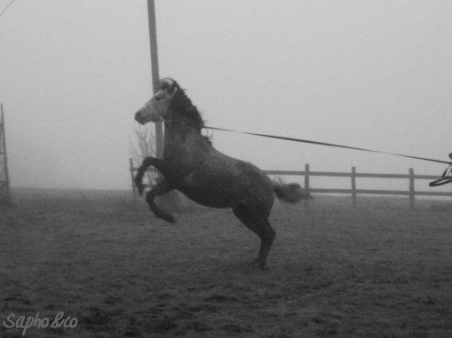 petit retour en arrière; le 1er Janvier 2011 avec ma Saphounette !