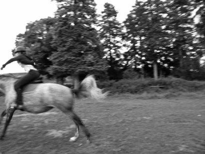 RAS côté chevaux