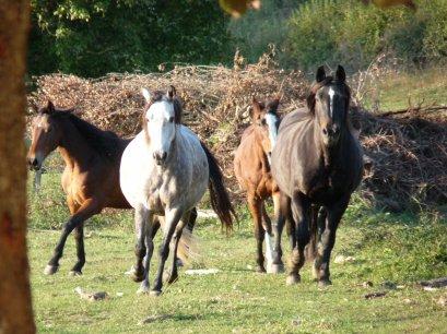 Nouvelle venue! :D Le troupeau s'agrandit !