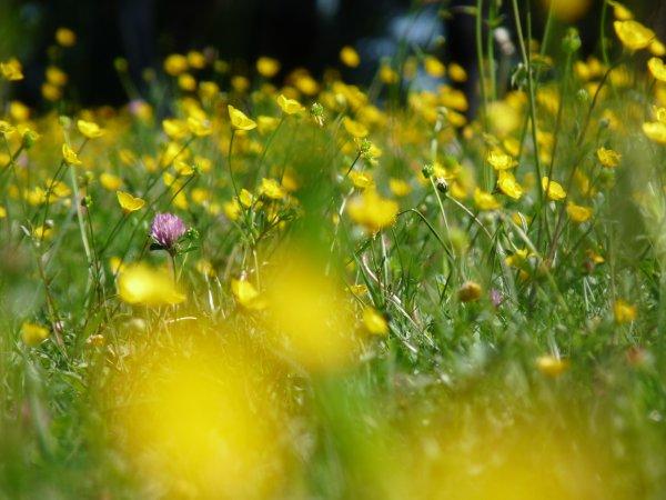 Enfin des nouvelles! Vive le printemps!