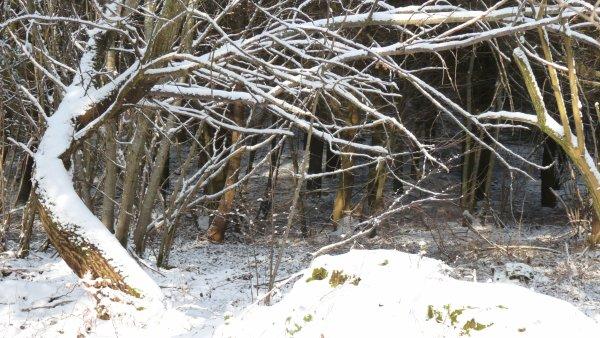 """"""" petit troupeau des neiges """""""