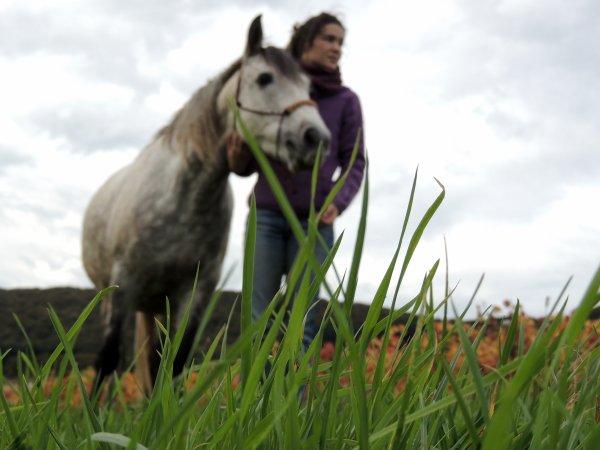 """"""" même sans cavalier, un cheval sera toujours un cheval. Tandis qu'un cavalier sans cheval n'est qu'un homme """""""