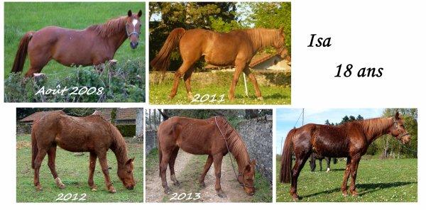 Photos de chevaux annuelles