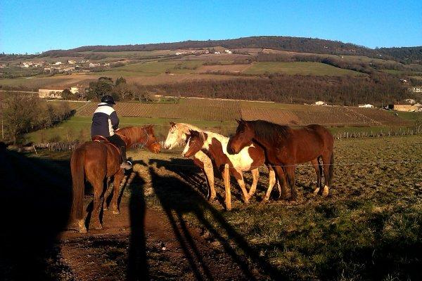 Retour en Bourgogne ,dans le froid de l'hiver
