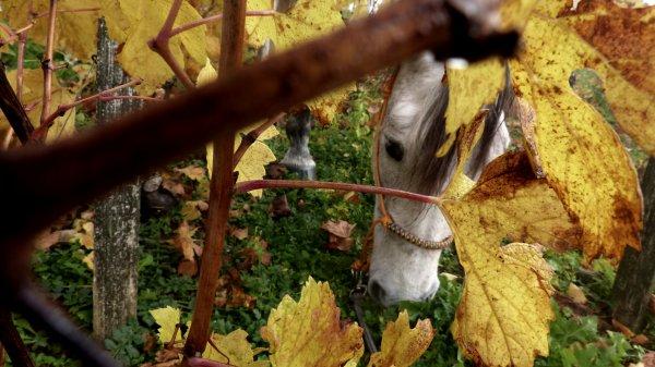 Retour en Bourgogne ! Photos automnales