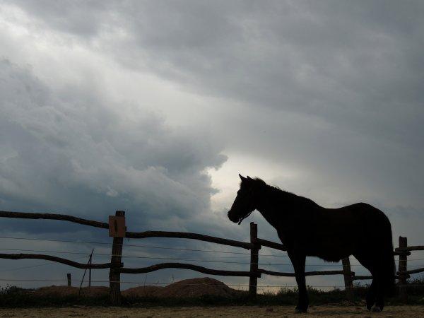 Une journée aux poneys plume