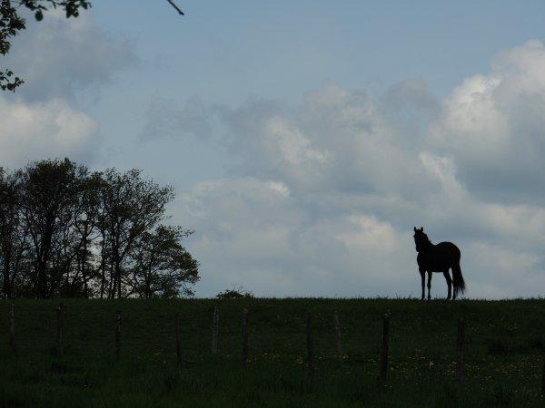 balade en tête à tête avec poney, 15km