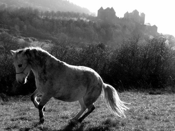 L'hiver, le froid, la boue, les chevaux