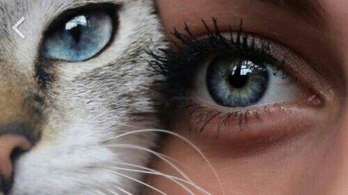 Mais qui est Cat ?