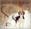 xAnimaux-nature