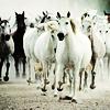 pour recevoir de l'amour de la part d'un cheval il faut avant tout lui en donner.