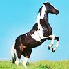 je vois parfois dans le regard d'un cheval la beauté inhumaine d'un monde d'avant le passage des hommes.