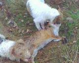 me foxe