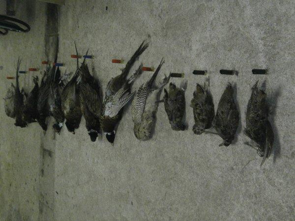 chasse au 9 faisan et 4 bécasse